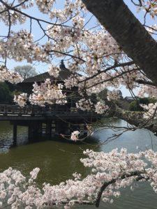 桜の向こうの浮見堂