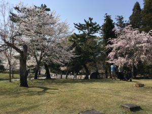 奈良公園 裏参道