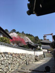 奈良公園 二月堂