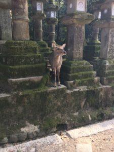 ひょっこりと現れた鹿