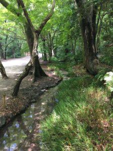 下鴨神社の小川