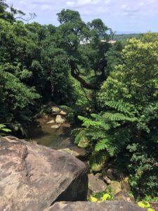 西表島・リバートレッキング 下は緑