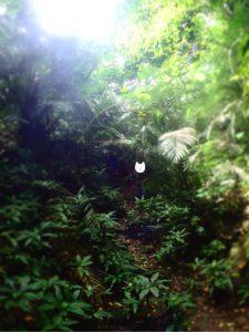 西表島 洞窟の入り口