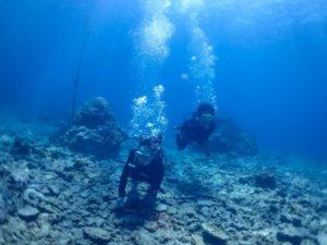 西表島 体験ダイビング 海底散歩