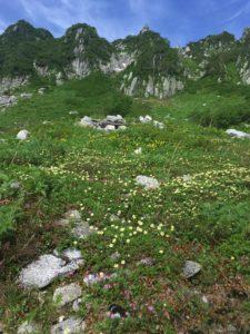 千畳敷カール 高山植物群落