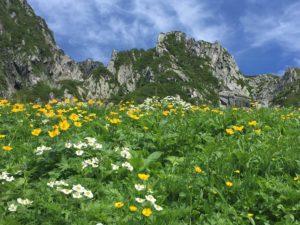 高山植物が咲き乱れる八丁坂