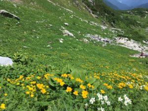 八丁坂 高山植物を満喫