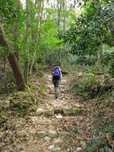 根の平峠への道