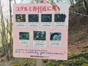 コグルミ谷 草花の看板