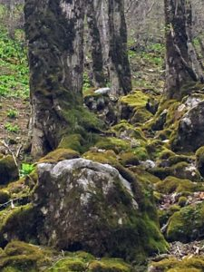 苔がモフモフの道