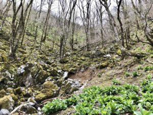 御池岳に向かう道