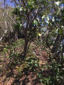 小峠からイブネ北端への道は難しい