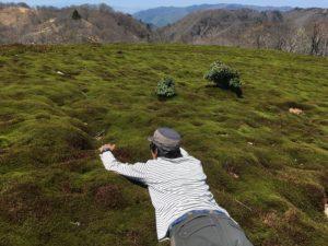 苔の上で寝そべる