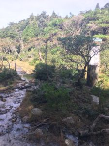 ハト峰湿原