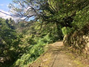 山河への道