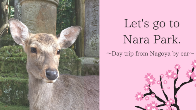 Let's go to Nara Park.Day trip from Nagoya by car