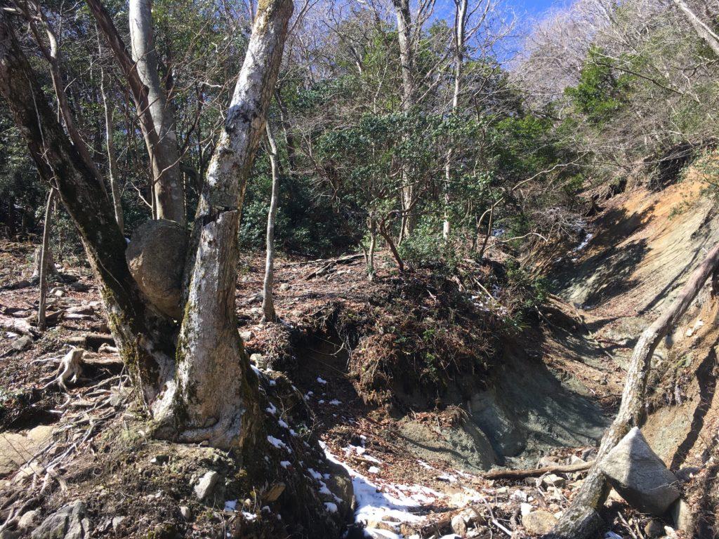 木に挟まれた岩