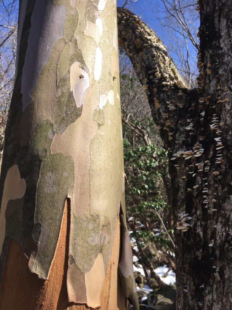 迷彩柄の木