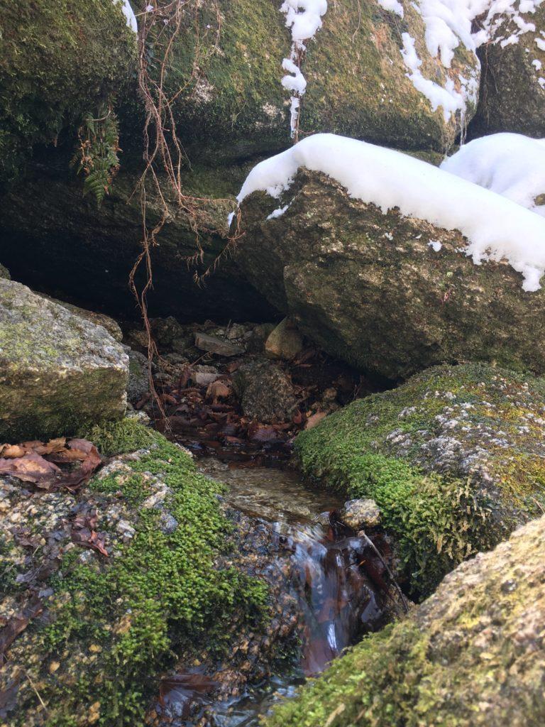 ブナ清水の湧き水
